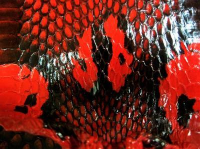 Кобра шкура натуральная красная