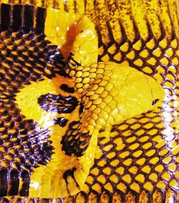 Кобра шкура натуральная жёлтая